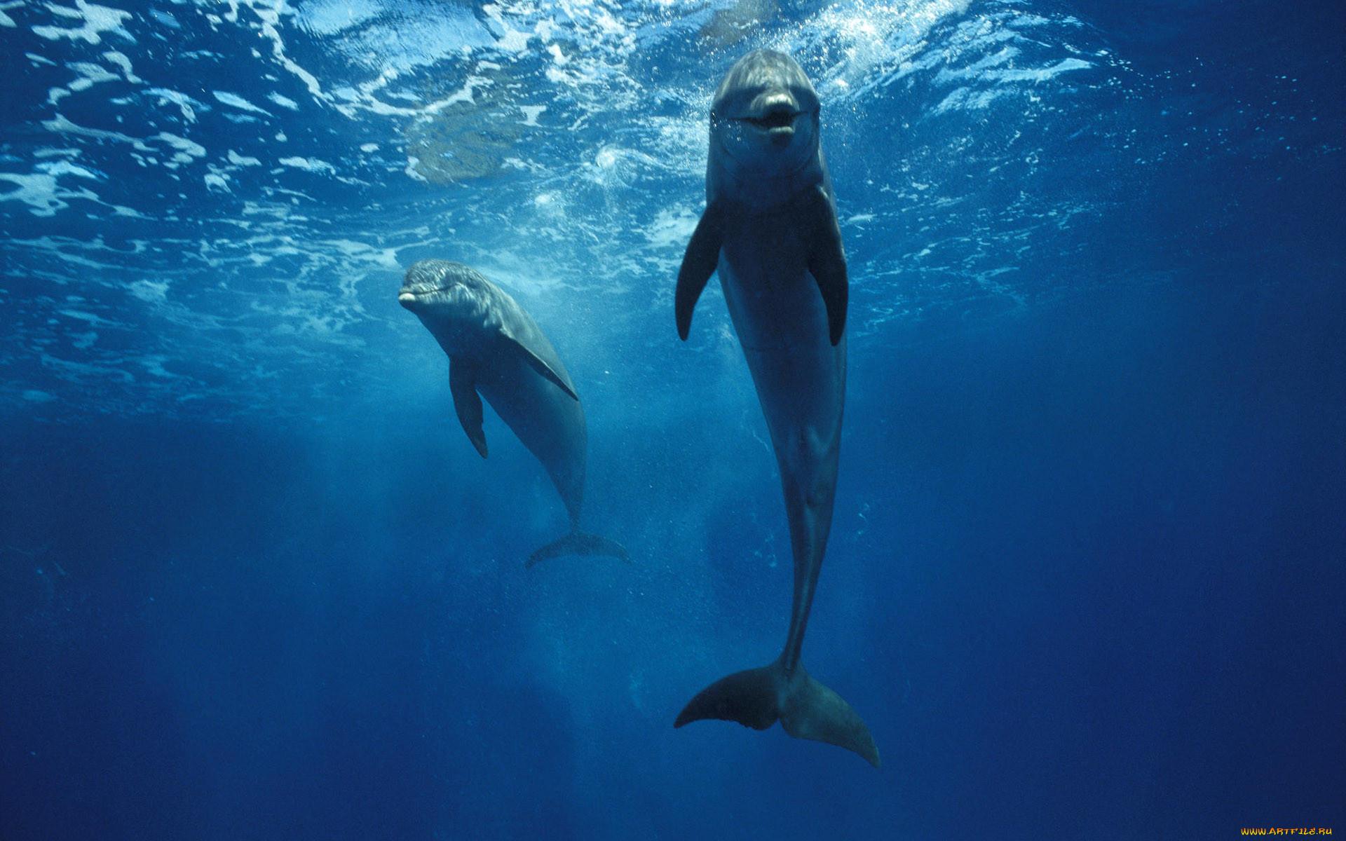 картинки на рабочий стол вода дельфины шаг